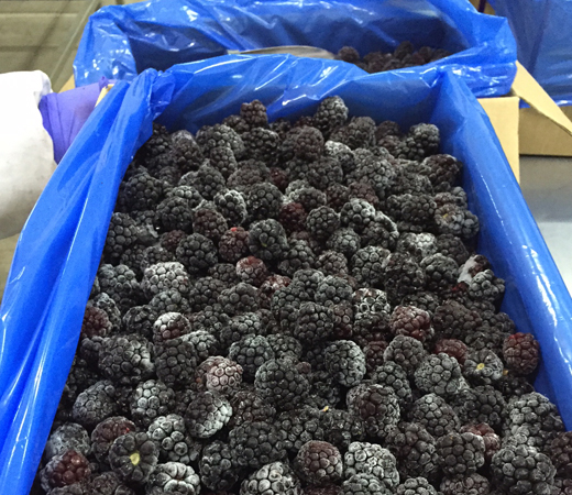IQF Frozen Fruits Products| Frozen Berries Chile | Torca
